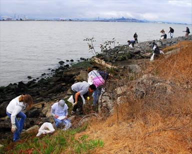 Emeryville shoreline cleanup